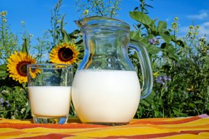 Glass of milk surrounded by sunflowers